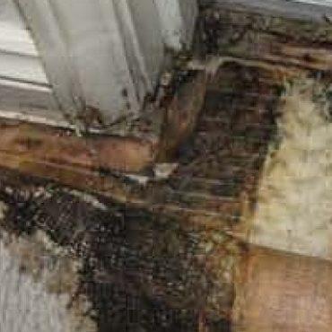Leaking Shower Failed Waterproofing